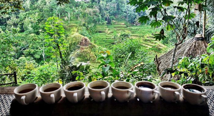 coffee_luwak2